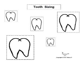 Tooth Sizing Sizing Teeth