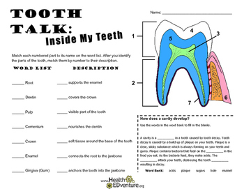 Tooth Talk: Inside My Teeth