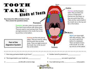 Tooth Talk: Kinds of Teeth