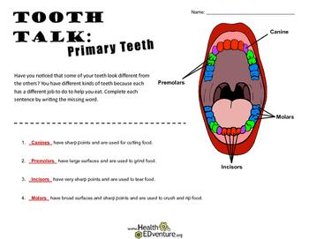 Tooth Talk: Primary Teeth