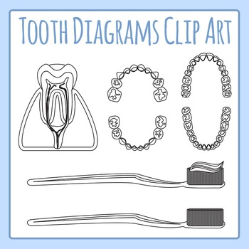 Tooth / Teeth Diagrams Black and White Line Art Clip Art Set for Commercial Use
