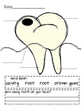 Tooth labeling with vocabulary questions