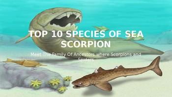 Top 10 Species of Sea Scorpions