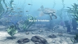 Top 10 Trilobites - power point - view pictures of 10 top