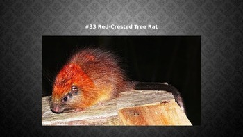 Top 35 Rarest Animals in the world - Power Point
