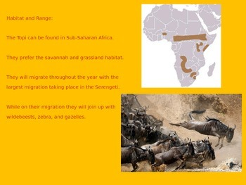 Topi - Antelope - Power Point - Information Facts History Pictures
