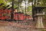 Torii gate, garden, Japan