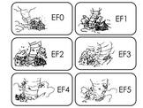 Tornado Facts Picture Word Flash Cards. Preschool flash ca