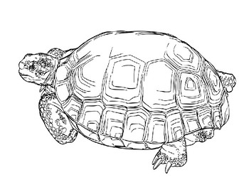 Tortoise Clip Art and Templates