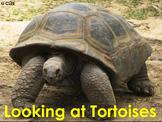 African Reptiles: Tortoise - PDF Presentation