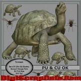 Tortoise Tubes