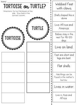 Tortoise or Turtle? Cut and Paste