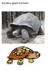 Tortoises Word Search and Picture Pack