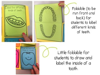 Totally Teeth!  A Research Project