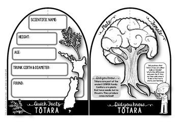 Totara {New Zealand Trees Make & Do Activity Pack}