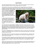 Touching Spirit Bear Kermode Bears (Spirit Bears) Informat
