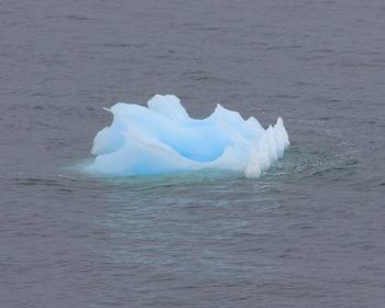 Tracy Arm Alaska Ice Bergs