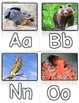 Traditional Alphabet Poster SMALL 3x5 WORD WALL zoo phonic