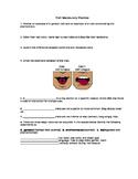 Trait Vocabulary Practice