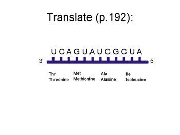 Transcribe and Translate Practice Presentation