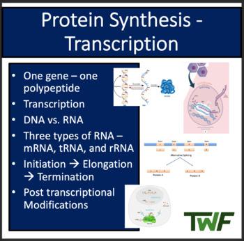 Transcription - DNA Replication - A Senior Biology PowerPoint Lesson & Notes