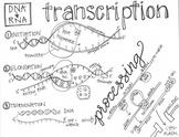 Transcription Sketch Notes