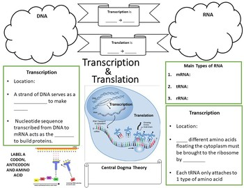 Transcription & Translation Doodle Handout