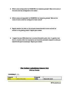 Transcription and Translation Activity