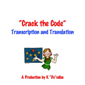 Transcription and Translation Activity: Crack the Code