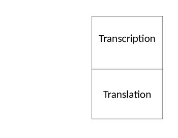 Transcription and Translation Foldable