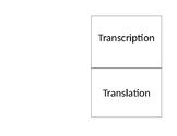 Transcription and Translation Foldable