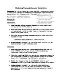 Transcription and Translation Model Instructions