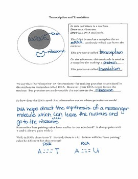 Transcription and Translation Notebooking Pages with Answer Key
