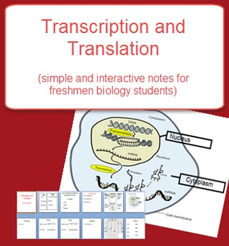 Transcription and Translation Notes (DNA)
