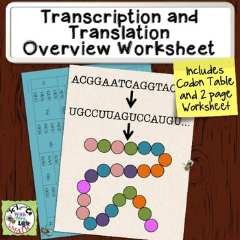 Transcription and Translation Overview Worksheet by Science With ...