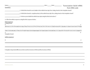 Transcription and Translation Overview Worksheet
