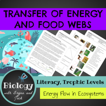 Transfer of Energy In Ecosystem: Reading, Food Web and Analysis