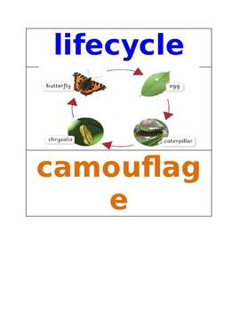 Transformation Pre K Vocabulary Words NYCDOE