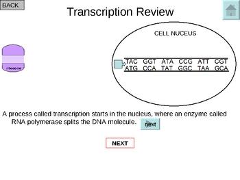 Translation Interactive Tutorial