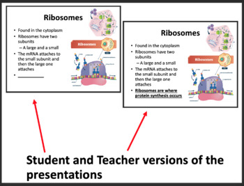 Translation - Protein Synthesis - A Senior Biology PowerPoint Lesson & Notes