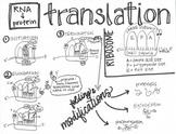 Translation Sketch Notes