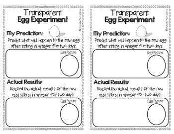 Transparent Egg Experiment FREEBIE