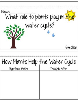 Transpiration in the Water Cycle Inquiry Based Hands On Experiment
