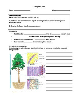 Transpiration in plants (student notes)