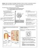 Transpiration in the context of Photosynthesis: Complete Lesson and Lab