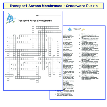 Cell Transport Crossword Osmosis Diffusion