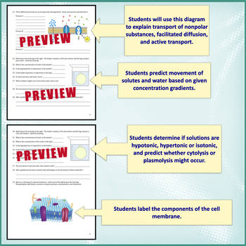 Cell Transport Worksheet (O... by Amy Brown Science   Teachers Pay ...