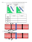 Transport across a cell membrane