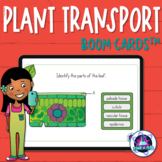 Transport in Plants Boom Cards