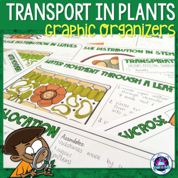 Transport in Plants Graphic Organizers